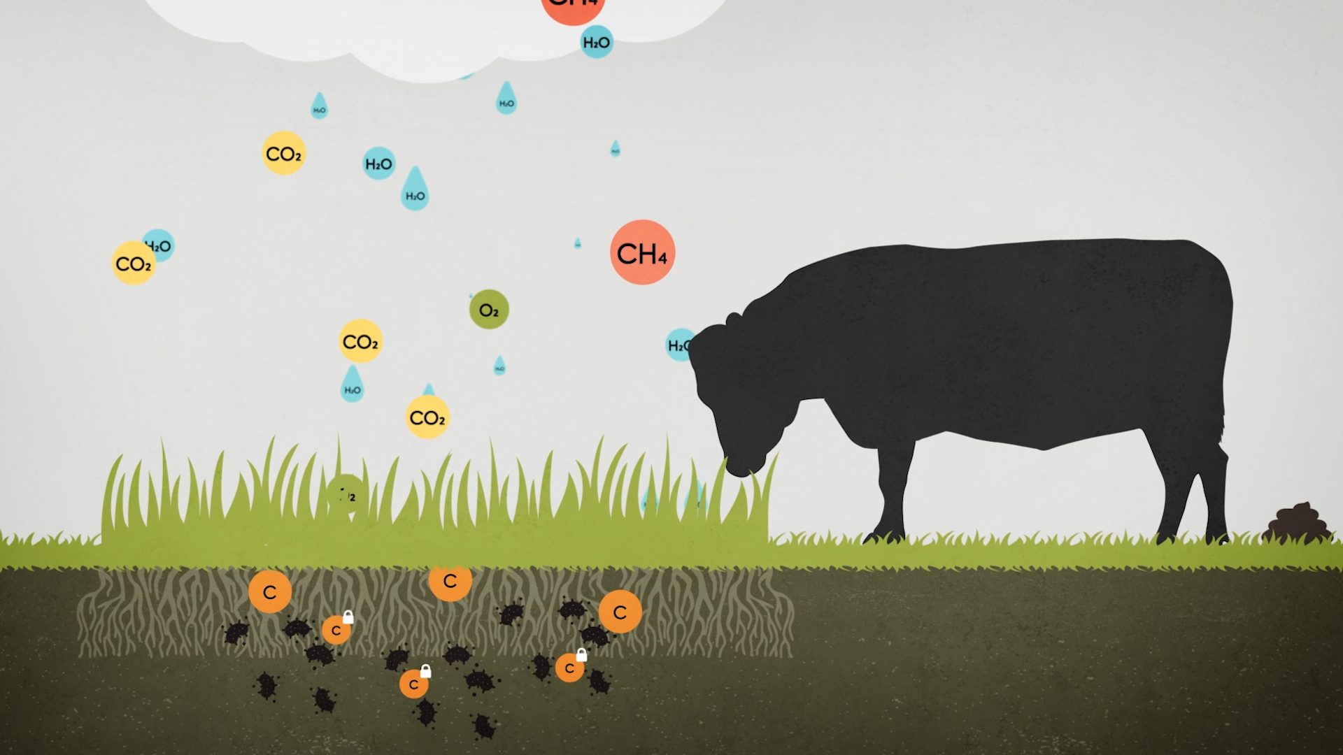 Infographic of cows and ghg emissions