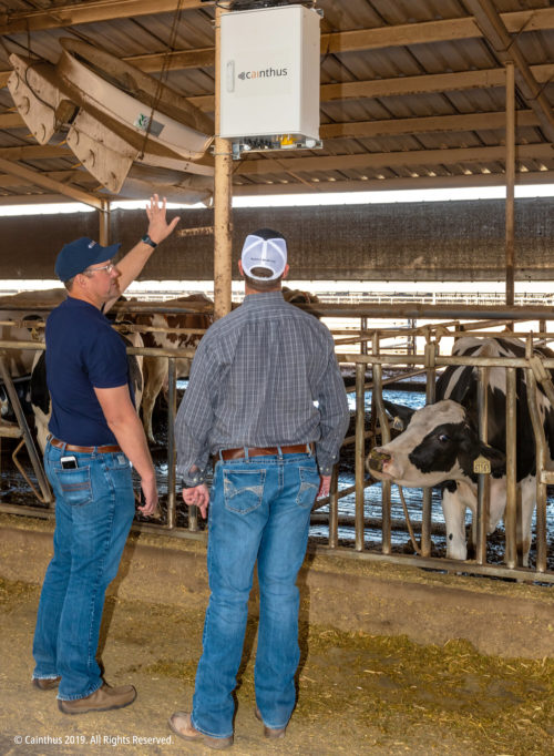 Two men install equipment in a cow barn