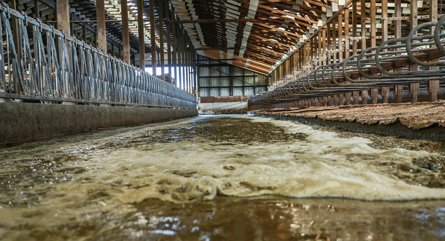 Water flushing out a dairy barn