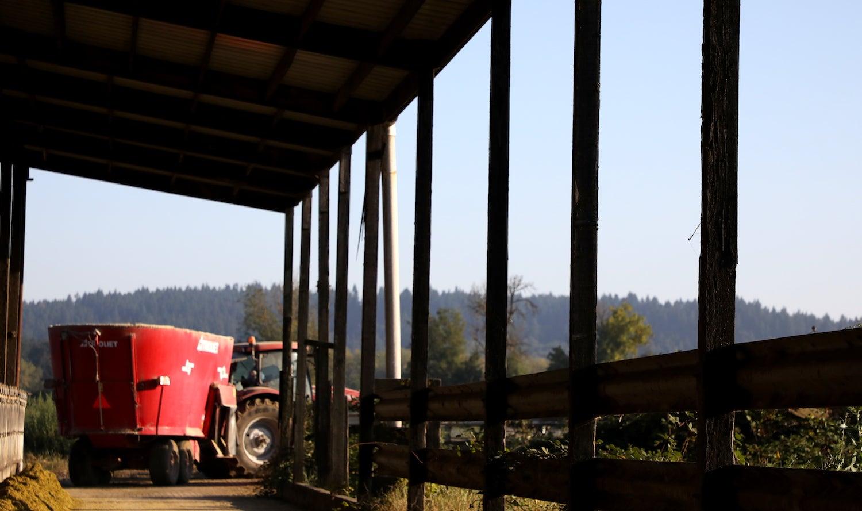 A bright red feed truck drives through a barn