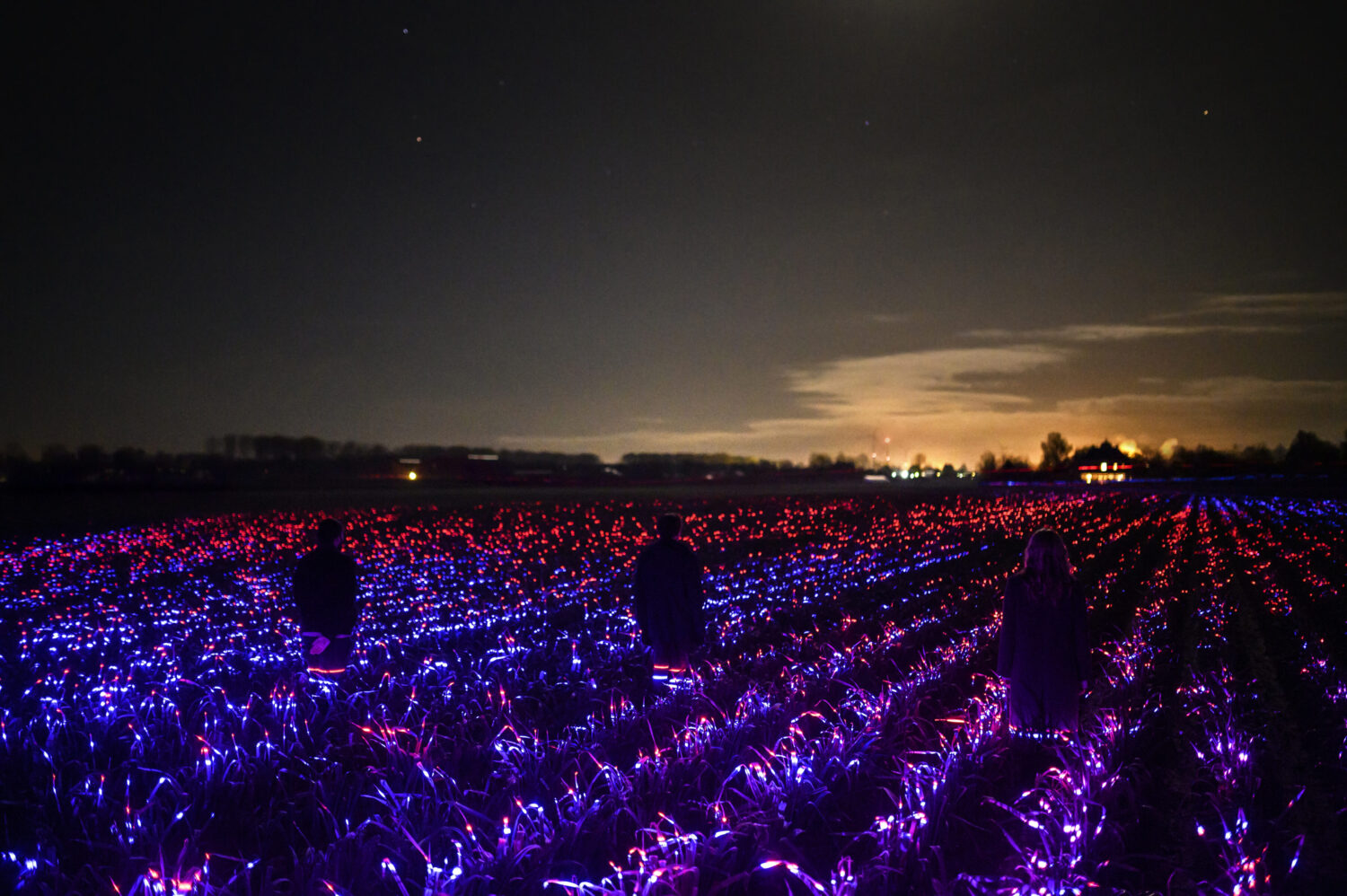 Field of plants illuminated in red, blue, and purple lights with two people in silouette and brighter lights in the distance