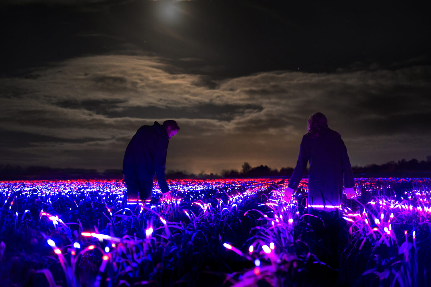 Two people at night standing amongst fields of plants illuminated in red and purple light