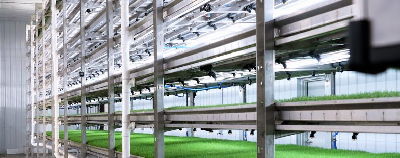 Indoor hydroponic feed system for livestock