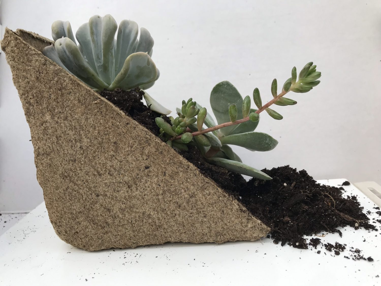 Triangular pulp material filled with soil and succulents