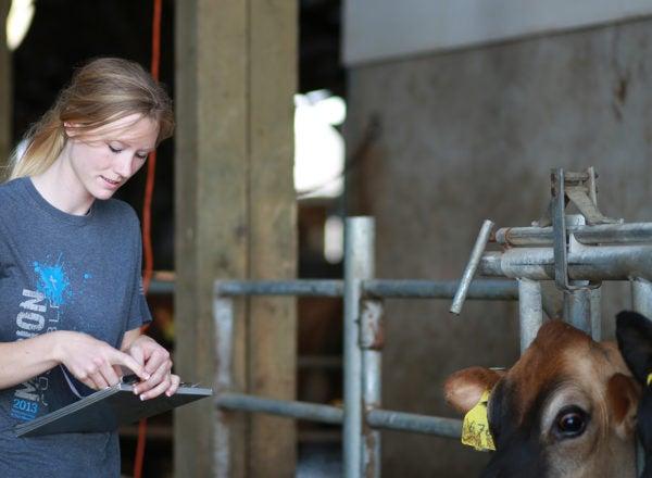 A woman holding a clipboard near cows