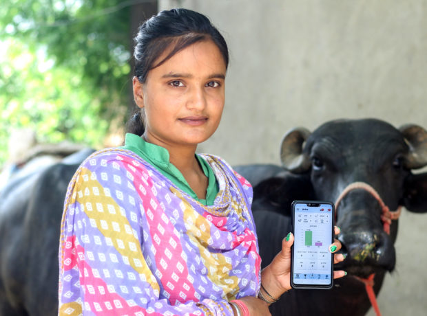Indian dairy farmer in a sari holds a phone
