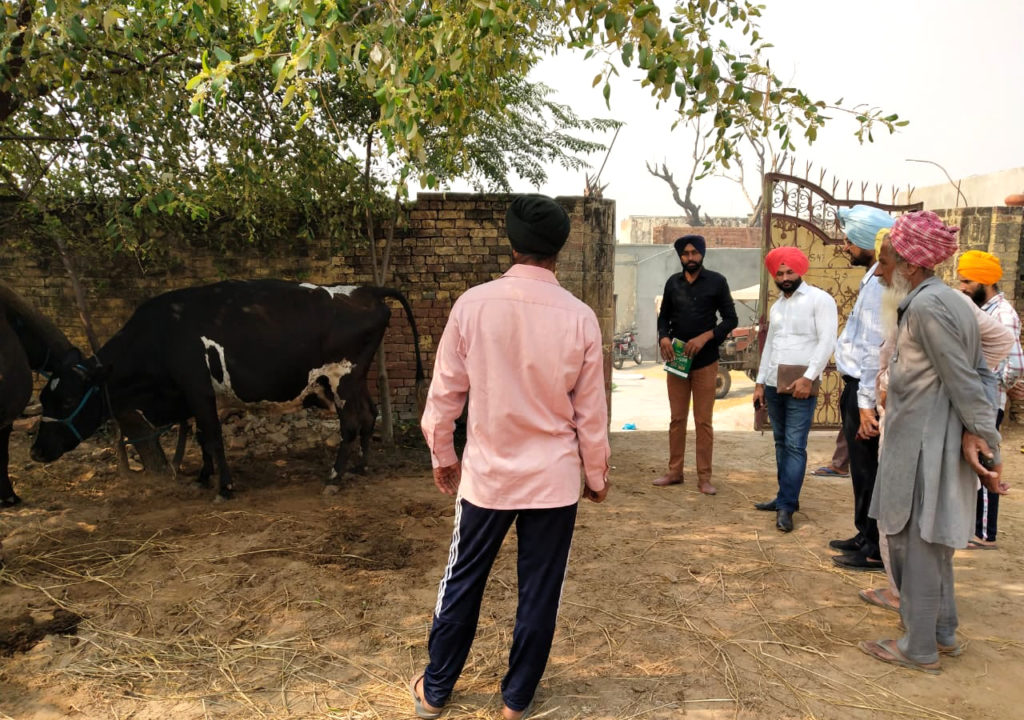 Group of Indian men stand around a cow