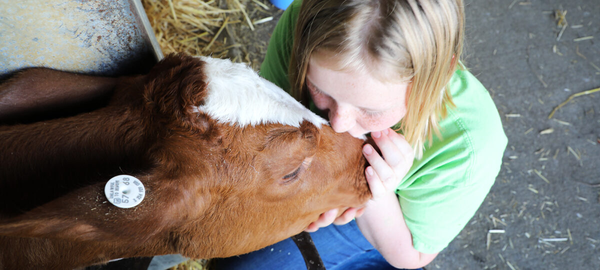 A young girl in a green shirt tenderly kisses a brown calf's nose
