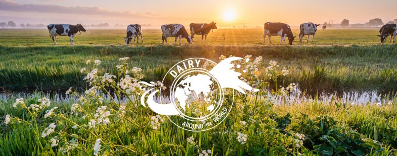 A sunrise image with cows out at pasture