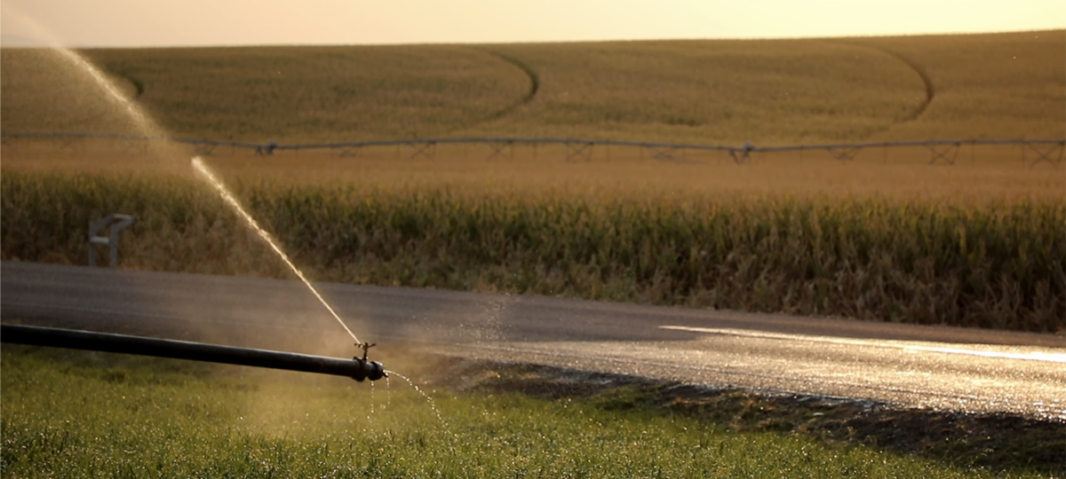 A water pipe irrigating a field