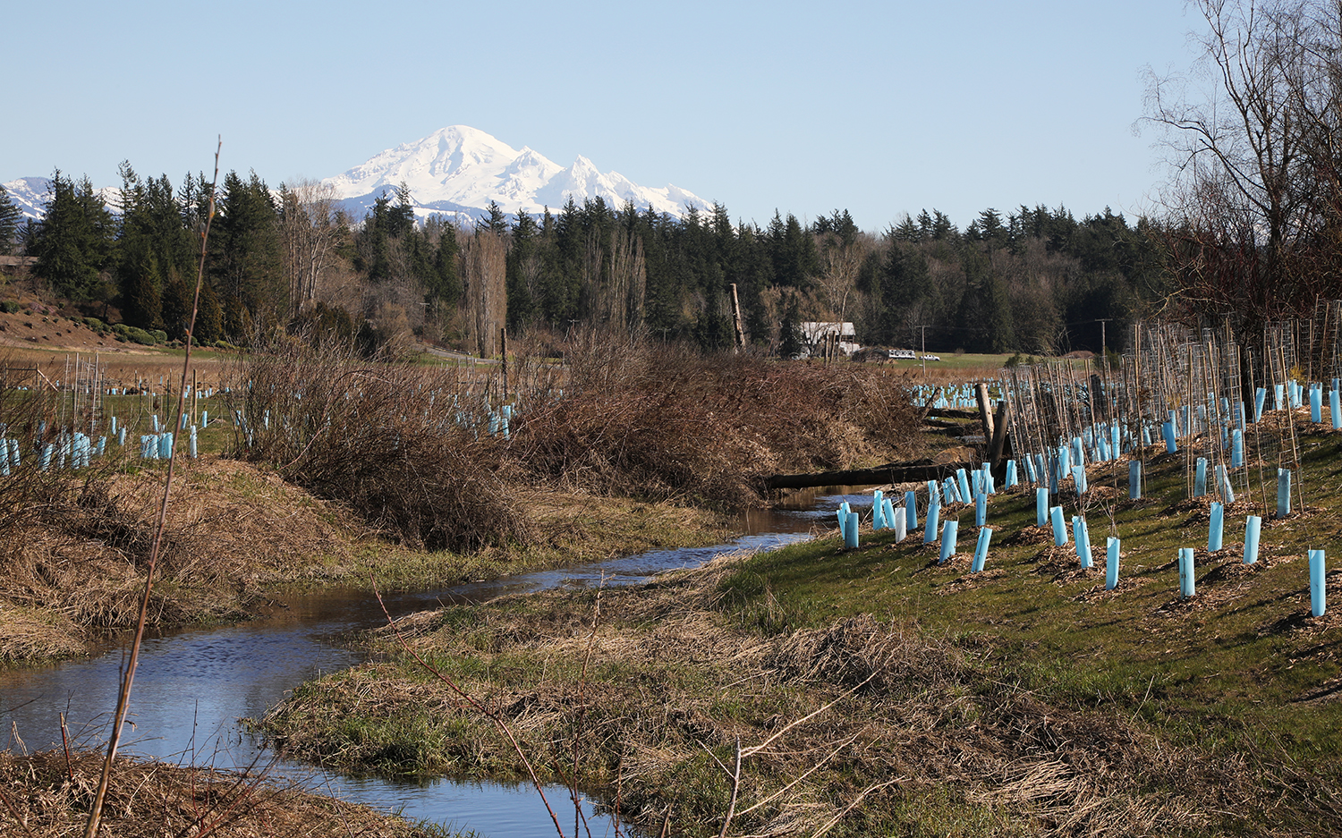 Riparian-area-with-mt-baker-in-the-background